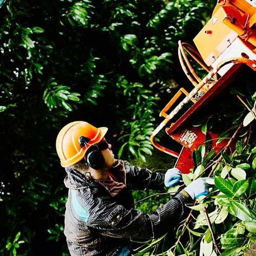 Baton Rouge Tree Services