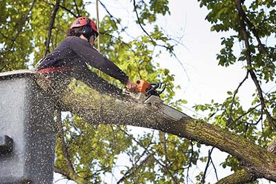Tree Removal High Point NC