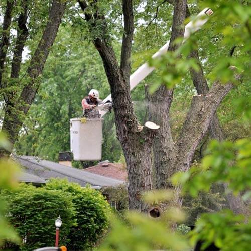 High Point NC Tree Services